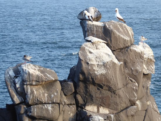 Espanola, Ekwador: Birds on rock outcrop