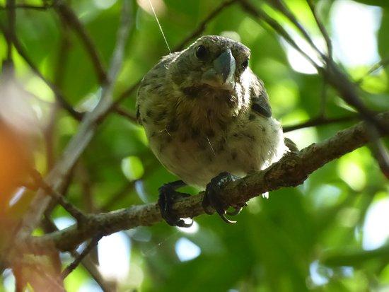 Santiago, Ecuador: Bird