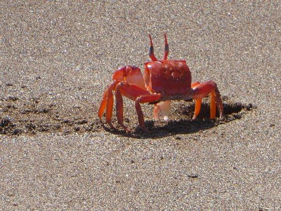 Santiago, Ecuador: Crab