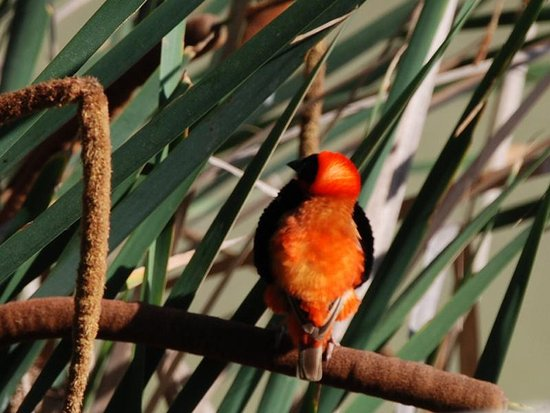 Addo, Afrika Selatan: unzählige Vögel