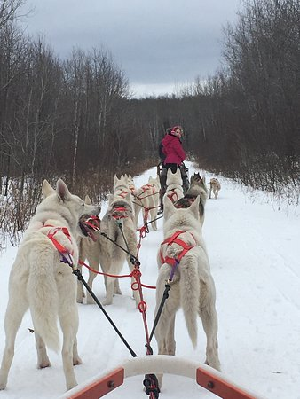 Wolfsong Adventures in Mushing : photo0.jpg