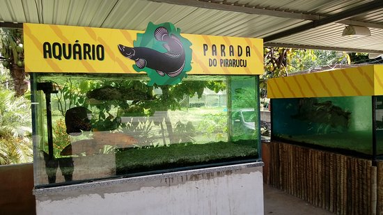 Mimoso Do Sul, ES: Parada Do Pirarucu