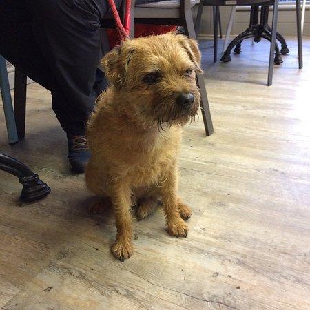 Grasmere, UK: Dog friendly