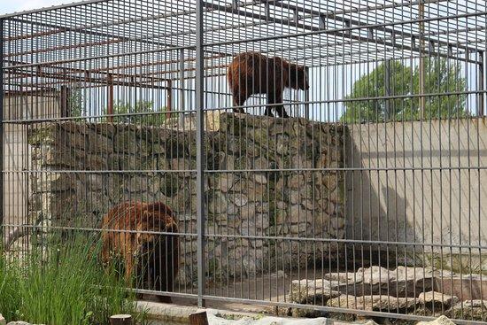 Vasylivka, Ukraine: домашний зоопарк в Васильевке