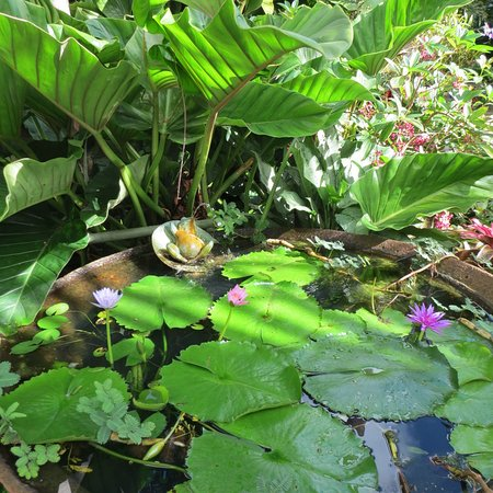 Hunte's Gardens: Relaxed in the garden