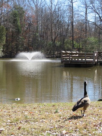 Matthews, Carolina do Norte: Fountain in the lake