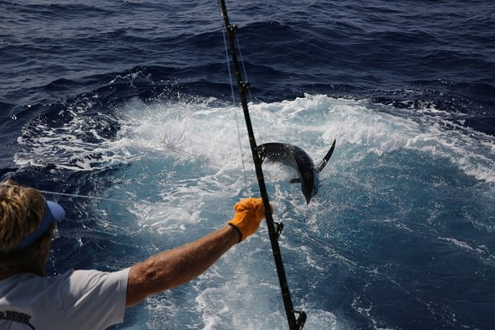Blu Marlin hook up sito di incontri per le femmine