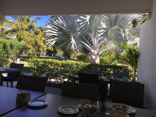 Hotel Riu Palace St Martin: Beautiful grey fern tree by the dining area.