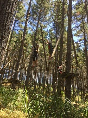 Tree Adventures: photo2.jpg