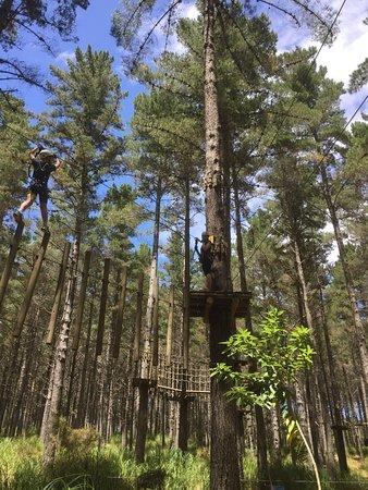 Tree Adventures: photo3.jpg