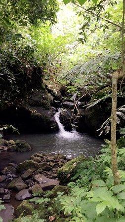Moorea, Franska Polynesien: Exotic veil mushroom and waterfalls