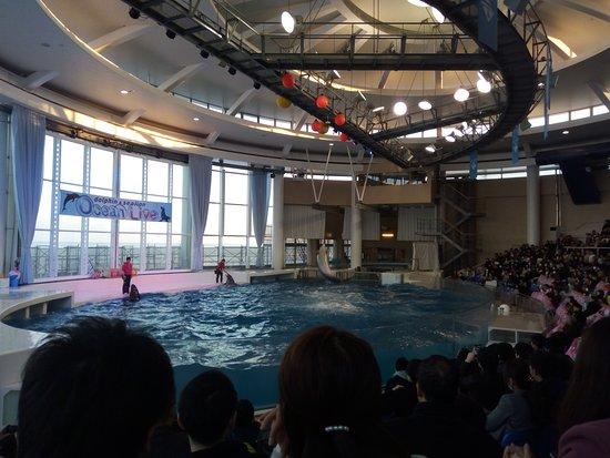 Aqua World Ibaraki Prefectural Oarai Aquarium: イルカショー