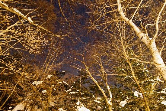 Resort Pension Berg Cot: 白樺の庭と満点の星空