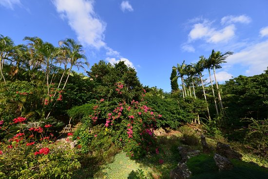 Yonnu Paradise