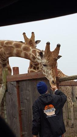 Point Arena, Califórnia: Giraffe Barn