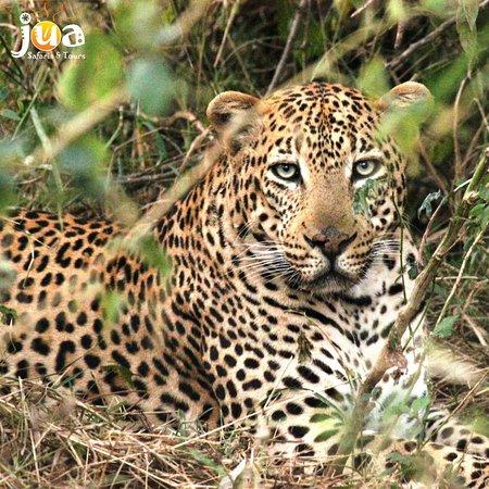 Jua Safaris and Tours