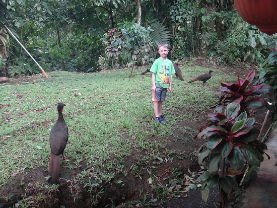 Cascajo's del Arenal : Turkey-type bird called paba