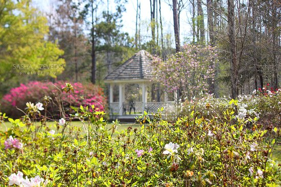 Moncks Corner, Carolina del Sur: Cypress Gardens
