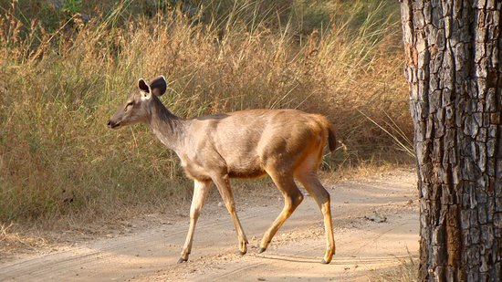 Europa: Pench National Park