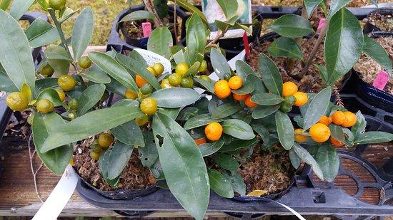 Manyo Botanical Garden - 나라 - Manyo Botanical Garden의 리뷰 - 트립어드바이저