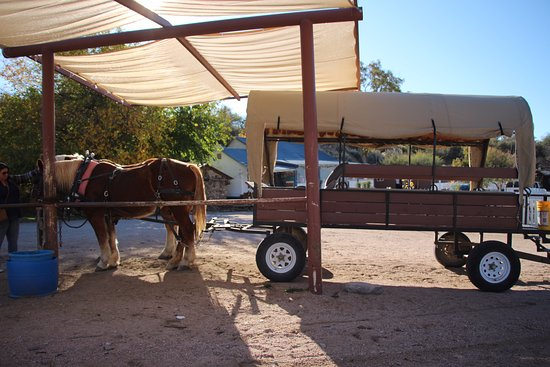 Meadview, AZ: Our Carriage ride