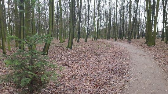 Kutno, Polen: Park Wiosny Ludow