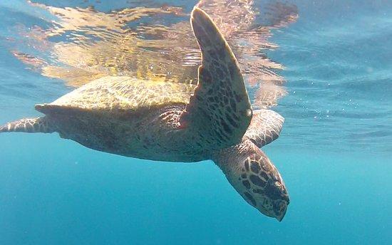 Ellaidhoo Maldives by Cinnamon: Great snorkelling!