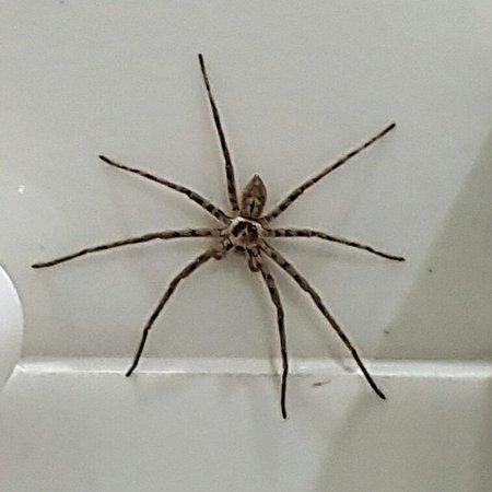 Tao Garden Health Spa & Resort: Super Spider living in the bath room