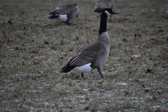 Belle Isle Park: photo4.jpg