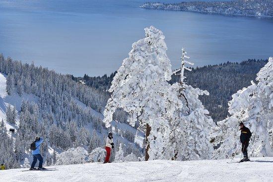 Black Tie Ski Rentals of North Lake Tahoe