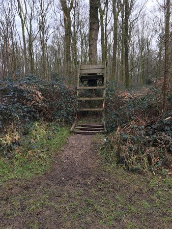 Savernake Forest: Possibly a seat for the giants who dwell in the forest?