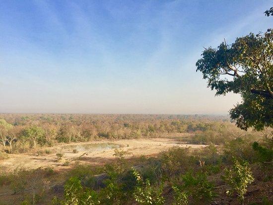 Mole National Park Resmi