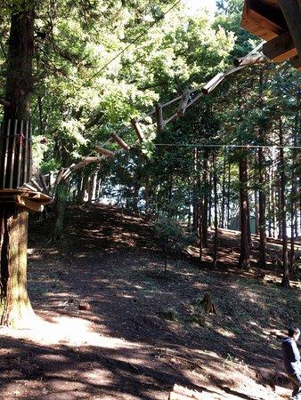 「ツリークロスアドベンチャー厚木・七沢温泉 画像」の画像検索結果