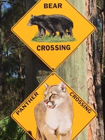 Jupiter, FL: Panthers and Bobcats and Bears, Oh My!