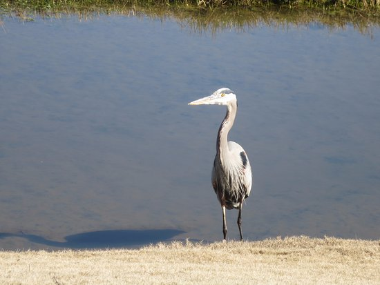 Farmstead Golf Links: Ibis??