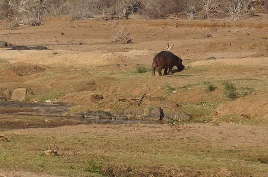 Kruger Ulusal Parkı, Güney Afrika: Nationaal Park Kruger