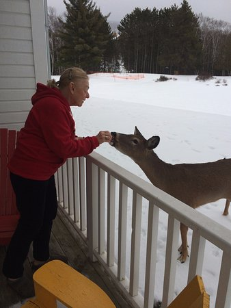Embarc Tremblant: One of the deer who visit daily