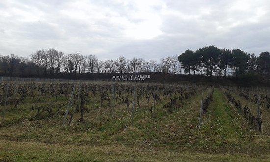 Seguret, Γαλλία: Les vignes du Domaine