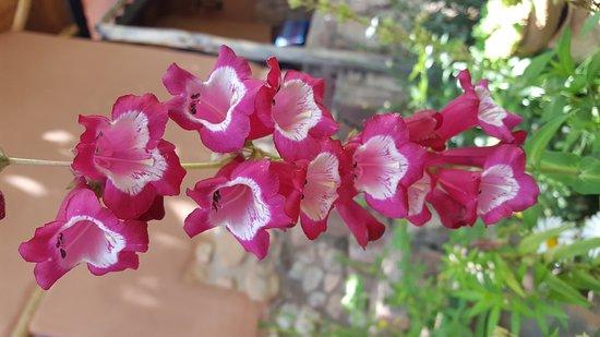 La Capilla Lodge: Flowers In The Garden. Jan, 2017.