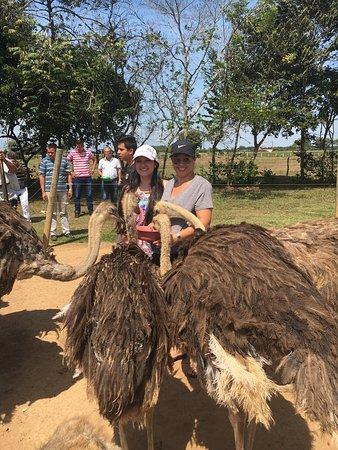 Puerto Lopez, Colombia: Parque Avestruz