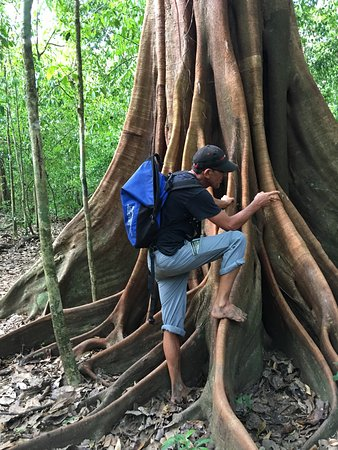 Drake Bay, Costa Rica: The barefoot guide extraordinaire, Carlos, at work  teaching us about the massive fig tree.