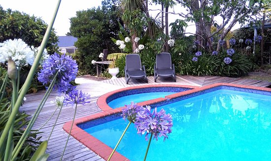 Colonial House Motel: Relax by the Saltwater Pool