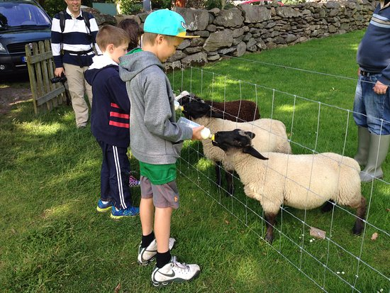 Kenmare, Irlandia: Something new this year...neat for the kids.