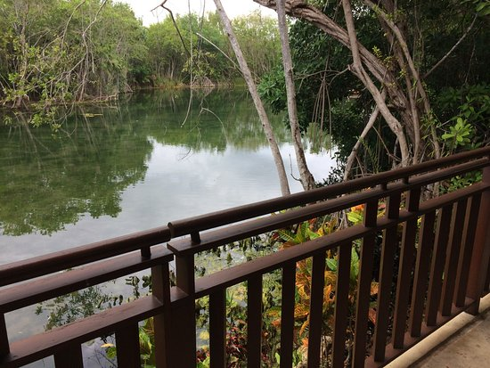 Fairmont Mayakoba: Canal view, great for birdwatching
