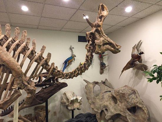 Stones 'n Bones Museum: Dinosaur