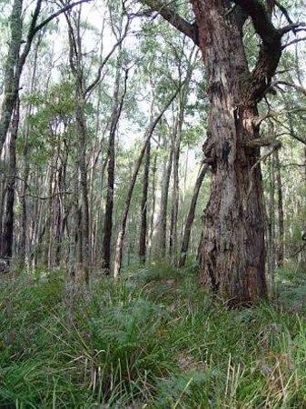 Heywood, Australia: Cobboboonee National Park