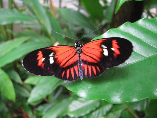 The Butterfly and Orchid Garden: Butterfly