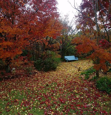 Highfields, ออสเตรเลีย: Garden walk in autumn!