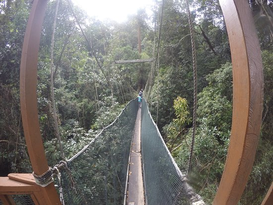 Poring, Malasia: The canopy walk