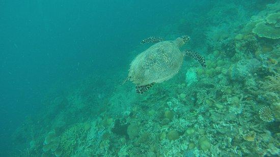 Coral Garden: une belle tortue pour finir